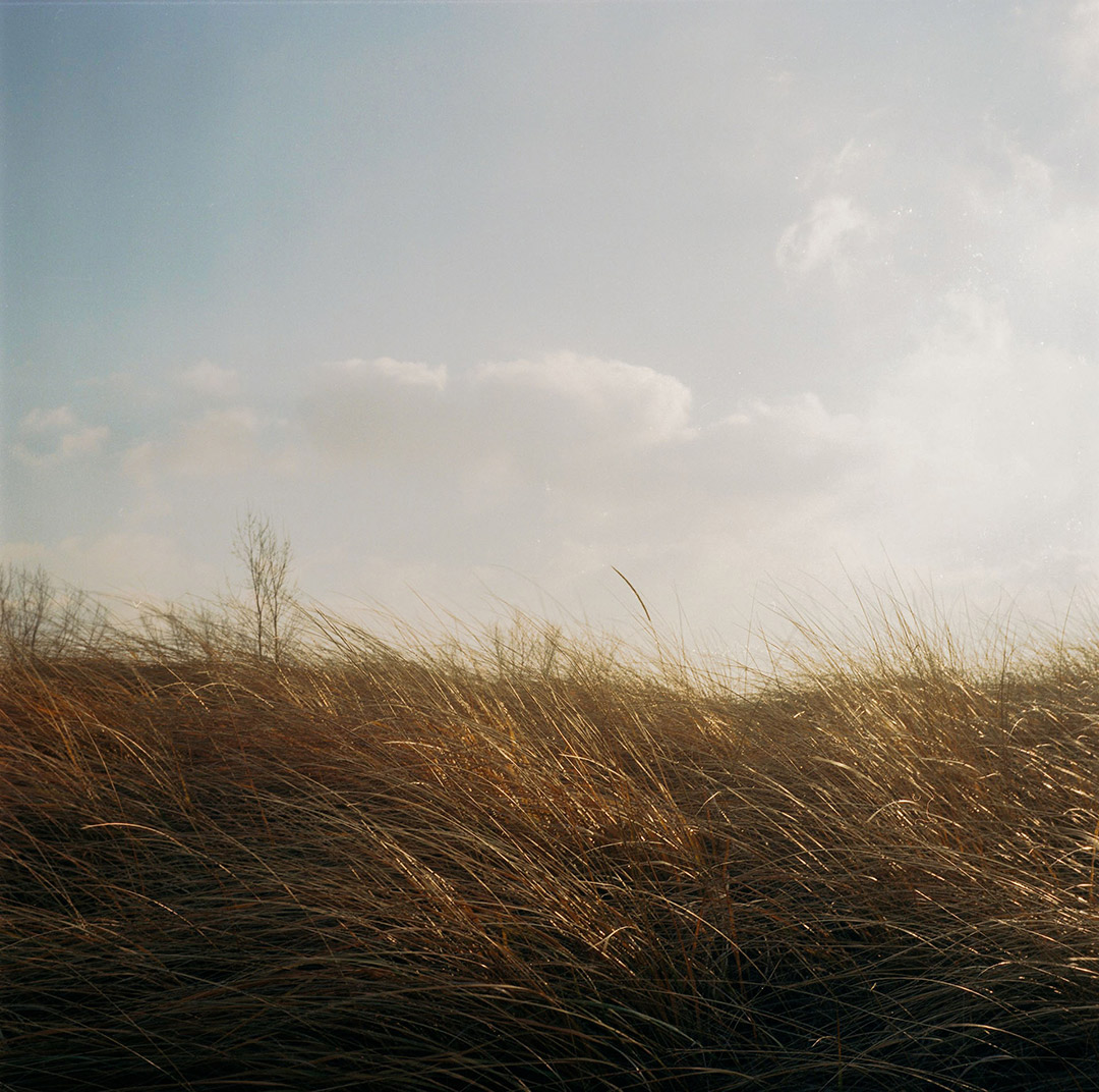Breezy Sand Dune